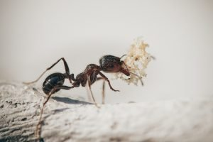 ants common household pests sarasota fl all american pest services